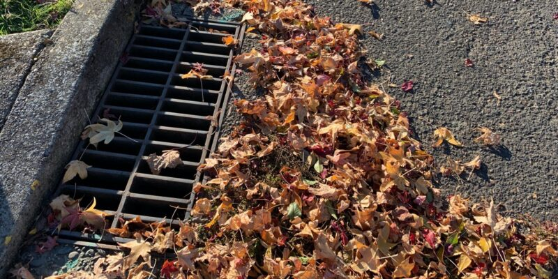 discarded leaves